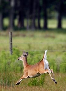 Deer Run