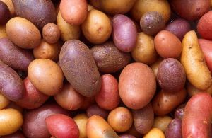 illustration catalyst to a potato 3