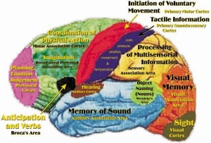 illustration temporal lobe epilepsy